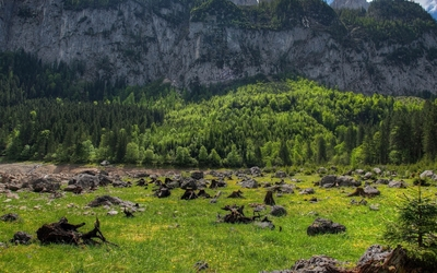 Rocky mountain rising from behind the green forest Wallpaper