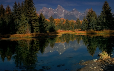 Rocky mountains behind the forest Wallpaper