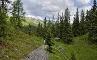 Rocky path towards the pine forest mountain wallpaper