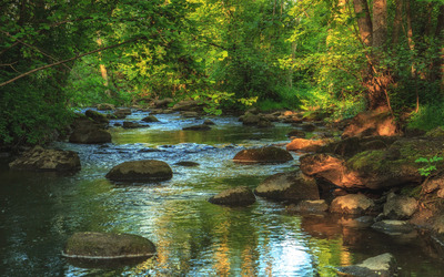 Rocky river in the forest wallpaper