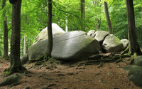 Rounded rocks in the mossy forest wallpaper 1920x1080 jpg
