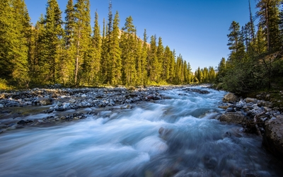 Rounded rocks in the roaring river by the forest wallpaper