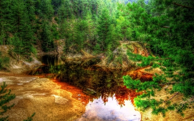 Rusty lake in the green forest wallpaper