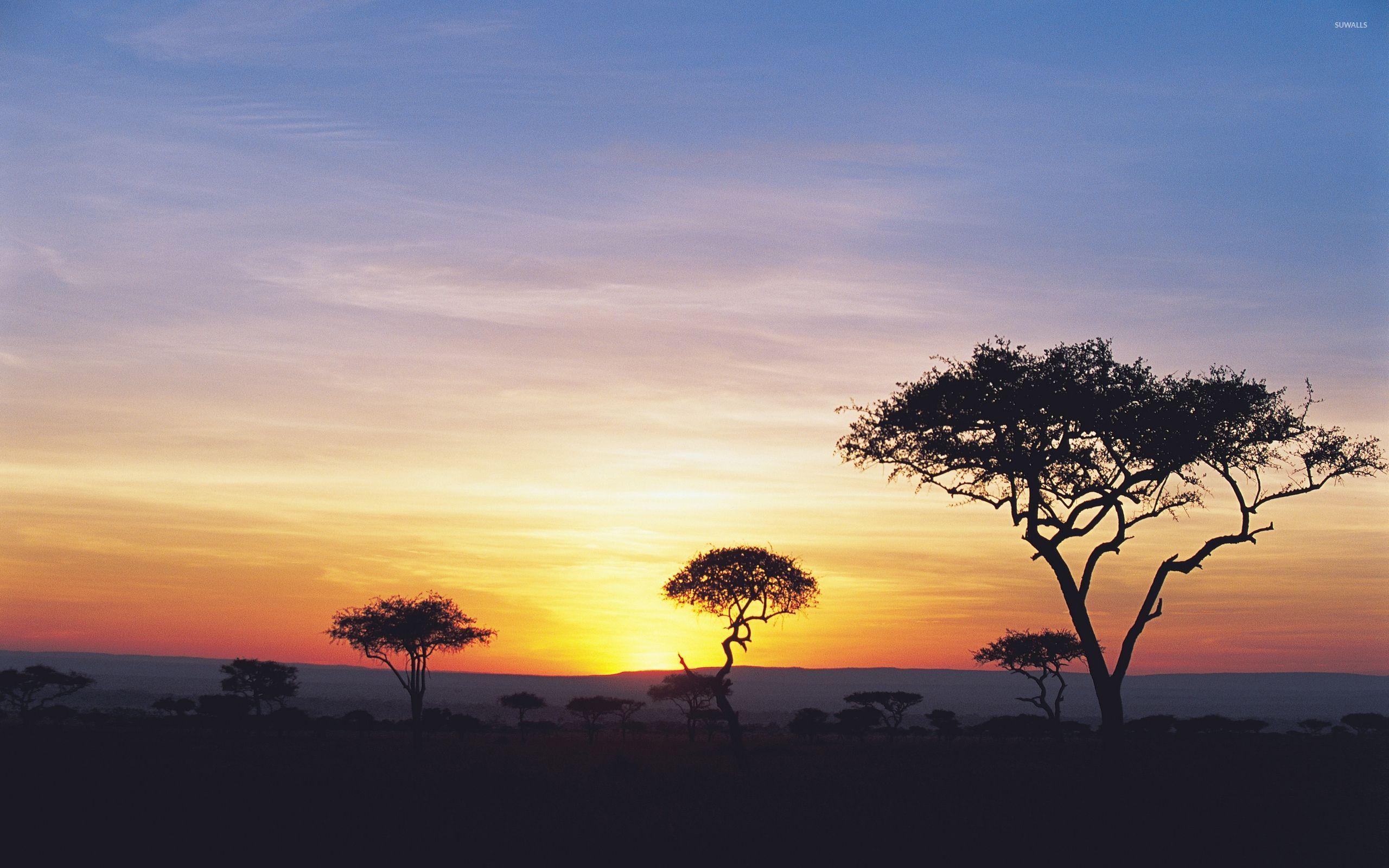 Safari Sunset Wallpaper  Nature Wallpapers 46499