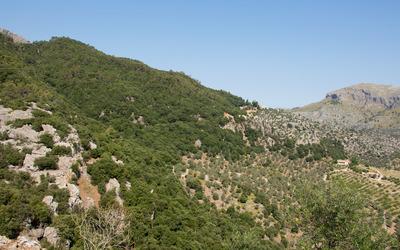Serra de Tramuntana slope wallpaper