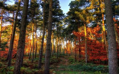 Shades of autumn in the forest Wallpaper