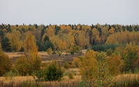 Shades of autumn in the forest [5] wallpaper 3840x2160 jpg