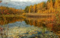 Shades of autumn in the forest [2] wallpaper 2560x1600 jpg