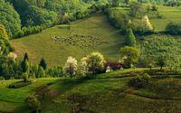 Sheep on green hill wallpaper 1920x1200 jpg
