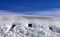 Shelters in the thick snow from the coldness of the winter wallpaper 1920x1080 jpg