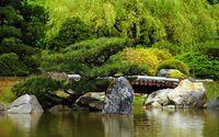 Small pine tree by the wooden bridge wallpaper 2560x1600 jpg