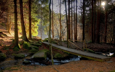Small wooden bridge in the mossy forest wallpaper