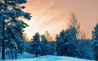 Snow in the dusk wallpaper 1920x1200 jpg