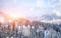 Snowfall over the forest wallpaper 2560x1600 jpg