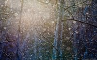 Snowing over the trees wallpaper 1920x1200 jpg