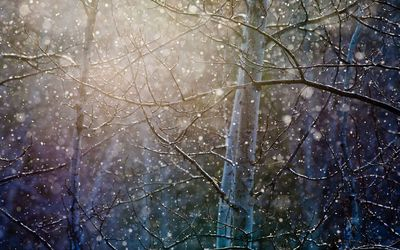 Snowing over the trees wallpaper