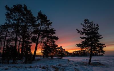 Snowy dusk wallpaper