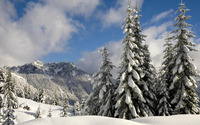 Snowy firs [2] wallpaper 1920x1080 jpg