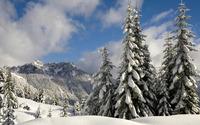 Snowy firs [2] wallpaper 1920x1080 jpg