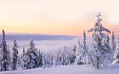 Snowy firs [3] wallpaper