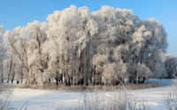 Snowy forest wallpaper 3840x2160 jpg