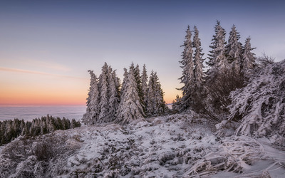Snowy forest above the clouds wallpaper