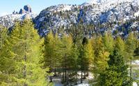 Snowy mountain forest wallpaper 1920x1200 jpg