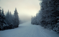 Snowy path in the foggy forest wallpaper 2560x1600 jpg