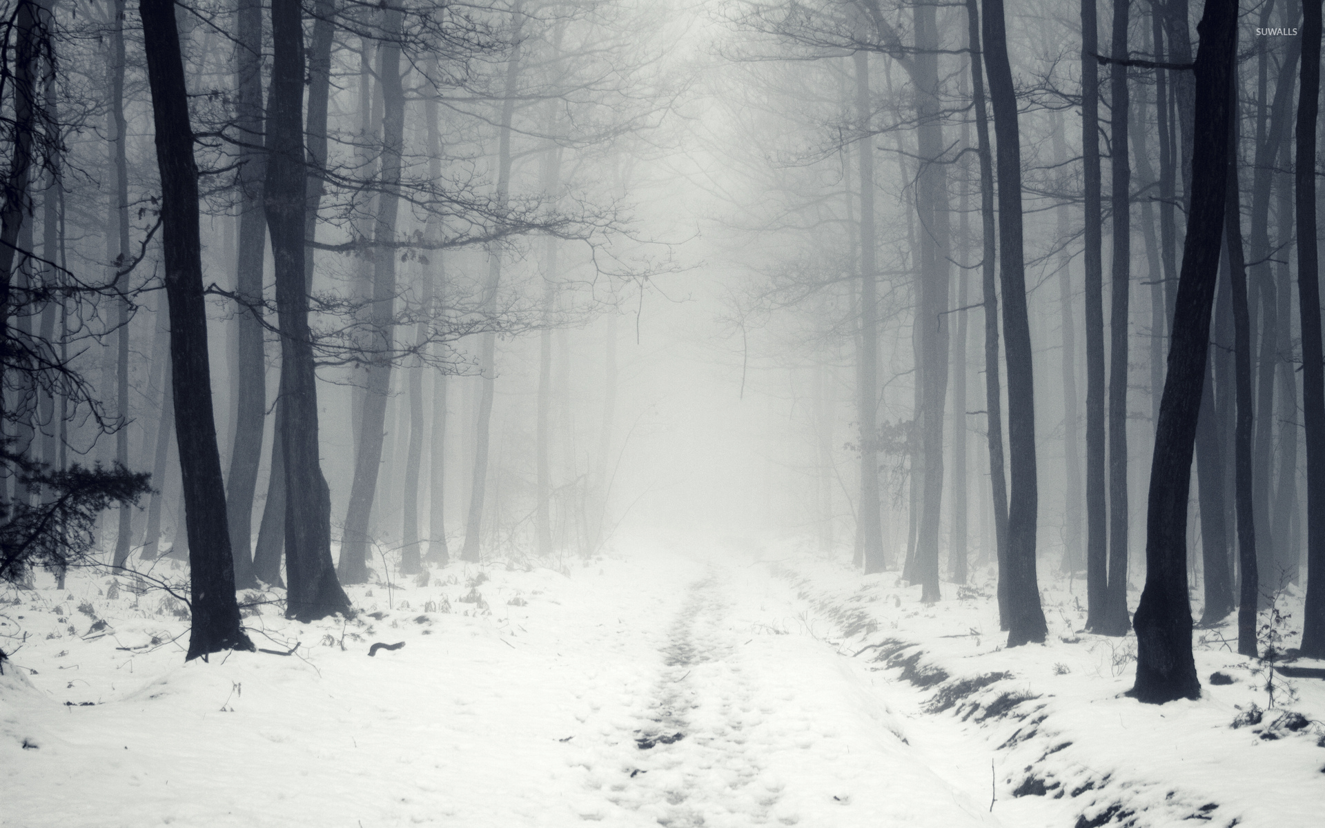Snowy path in the foggy forest wallpaper Nature wallpapers