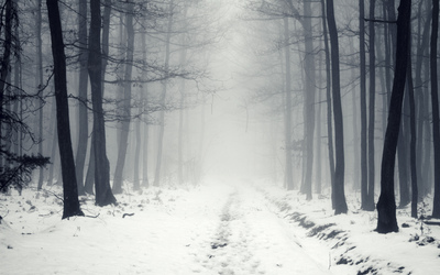 Snowy path in the foggy forest [2] wallpaper