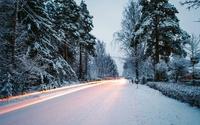 Snowy path through the pine trees wallpaper 1920x1200 jpg