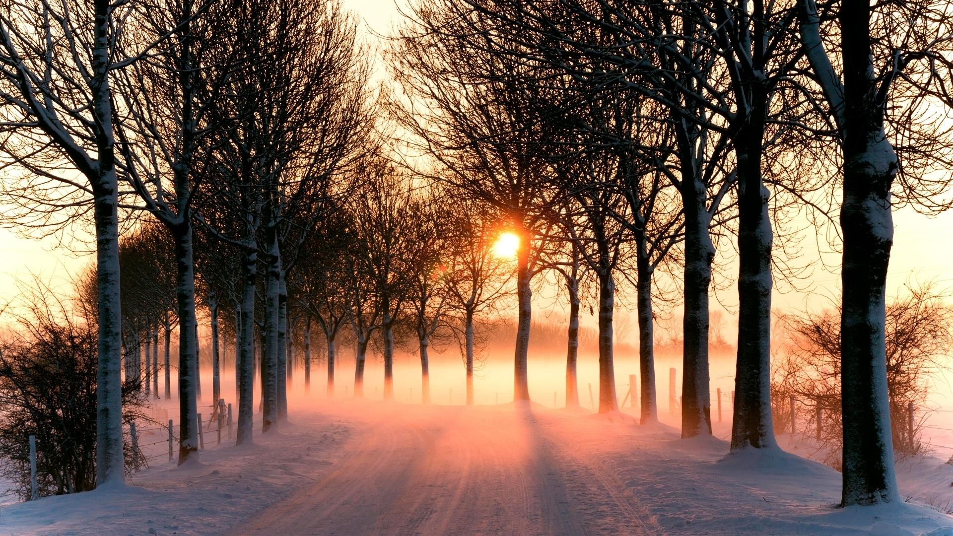 towards the snowy - photo #8