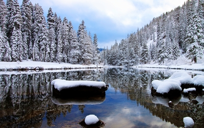 Snowy pine forest by the lake wallpaper