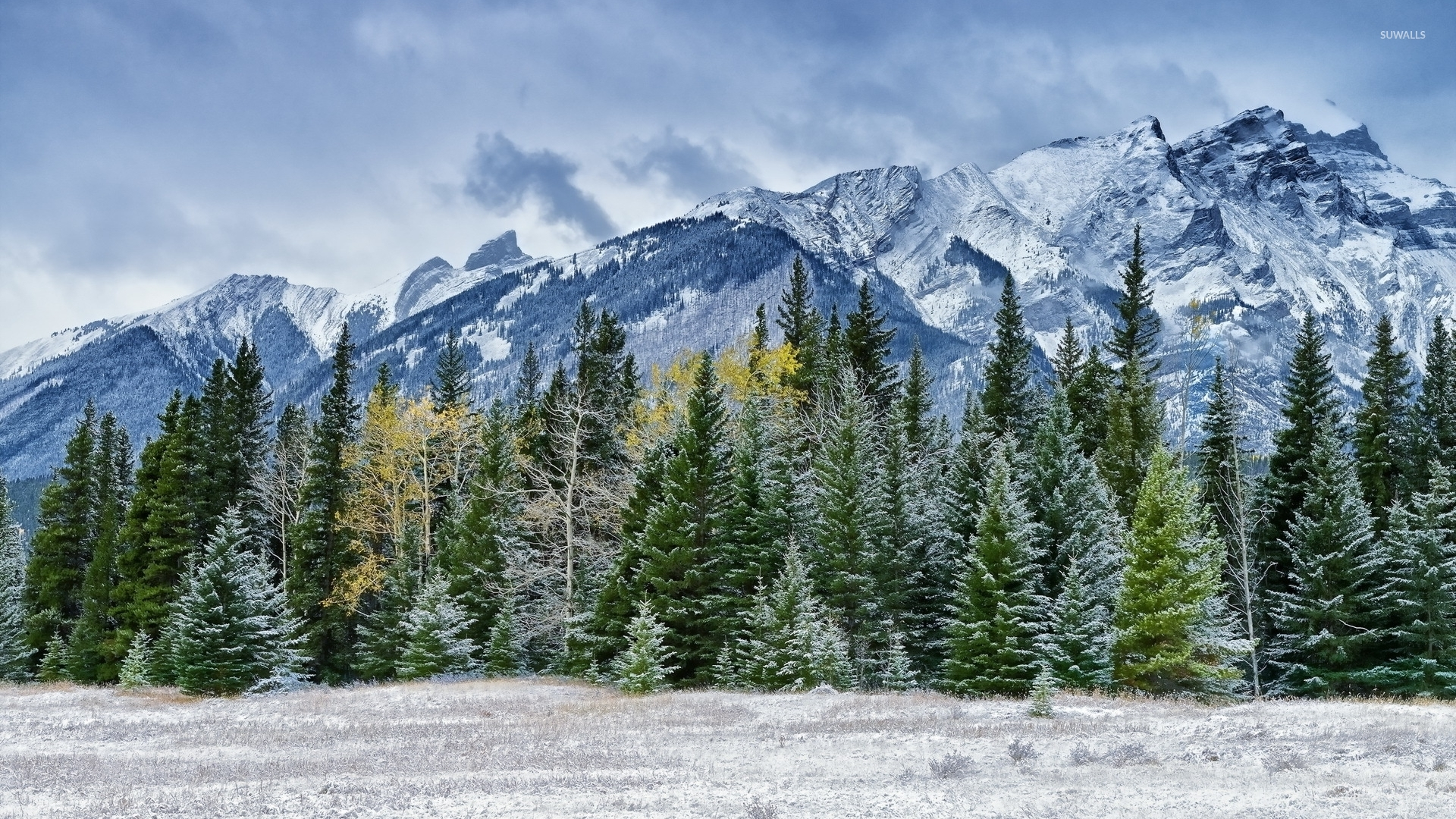 Snowy pine forest by the rocky mountains wallpaper ...