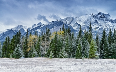 Snowy pine forest by the rocky mountains wallpaper