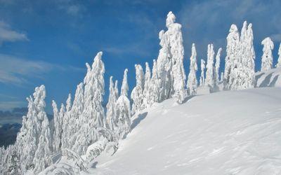 Snowy statues guarding the frozen winter nature Wallpaper