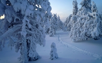 Snowy tree statues in the forest wallpaper 2560x1600 jpg
