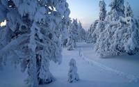 Snowy tree statues in the forest wallpaper 2560x1600 jpg
