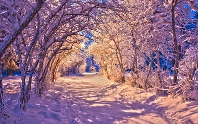 Snowy tree tunnel on the path through the park wallpaper