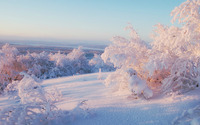 Snowy trees wallpaper 1920x1080 jpg