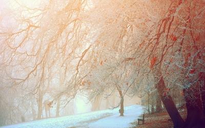 Snowy trees [4] wallpaper