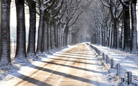 Snowy trees aside the road wallpaper 2560x1600 jpg