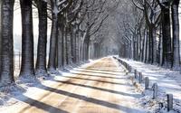 Snowy trees aside the road wallpaper 2560x1600 jpg