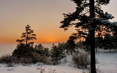 Snowy trees at golden sunset wallpaper