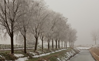 Snowy trees by the river [2] wallpaper 1920x1200 jpg