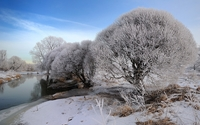 Snowy trees by the river wallpaper 1920x1200 jpg