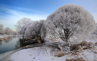 Snowy trees by the river wallpaper