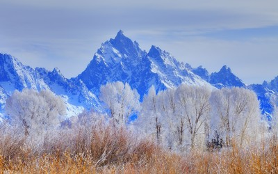 Snowy trees in front of the rocky mountain peaks wallpaper