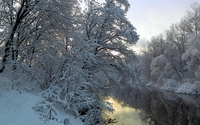 Snowy trees leaning towards the river wallpaper 1920x1080 jpg
