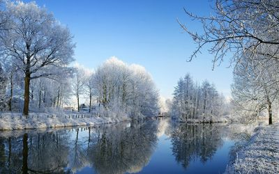Snowy trees reflecting in the mirror of the lake wallpaper